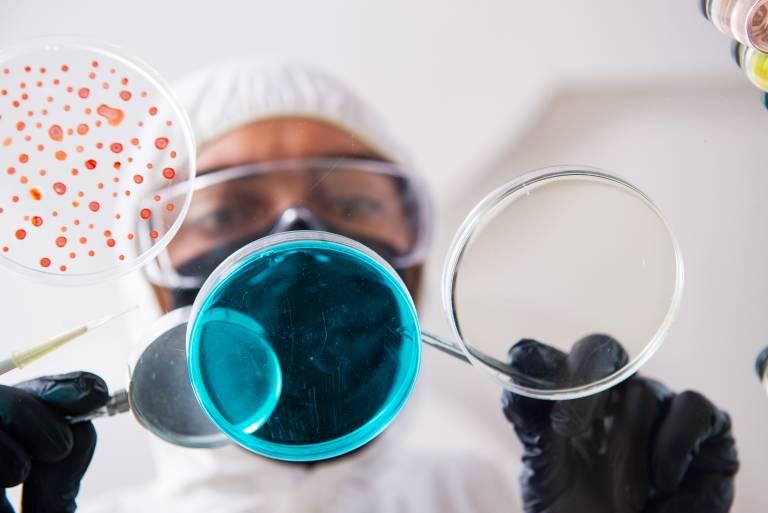 Laboratoriotyöntekijä tutkii petrimaljan virusviljelyä.