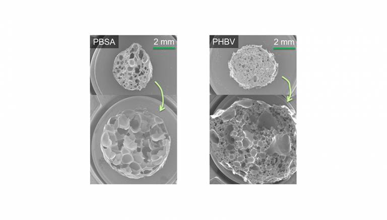 Figure 1. The expansion of PBSA and PHBV as seen in SEM images. The upper images represent reference materials with no chain extenders, while the lower ones contain chain extenders.